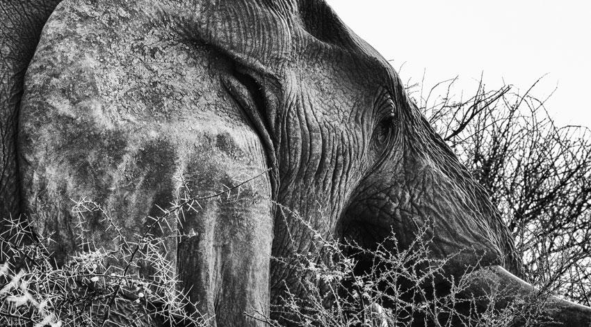 Un elefante non dimentica niente